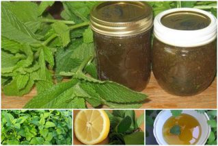 Read more about the article Варенье из мяты на зиму: 14 рецептов вкусного и полезного лакомства