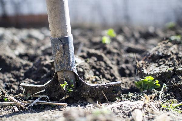 обезвреживание огородного грунта после сбора урожая