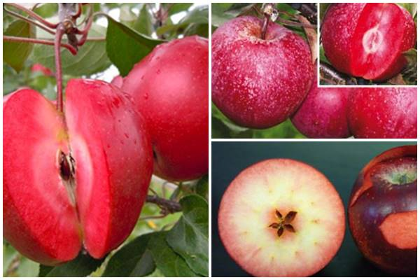 красные внутри яблоки
