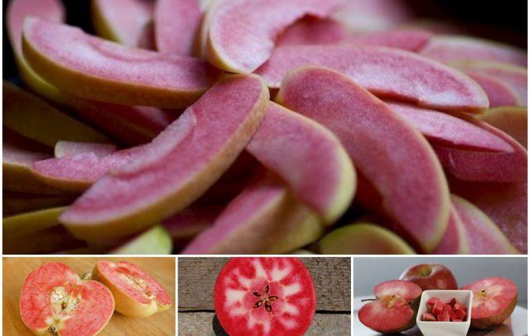Сорта яблонь с плодами с красной мякотью: обзор, ценные свойства
