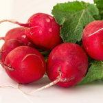 редис - выращивание в открытом грунте, посадка и уход