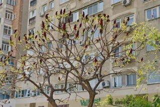 Как правильно купить квартиру на вторичном рынке жилья, чтобы не обманули