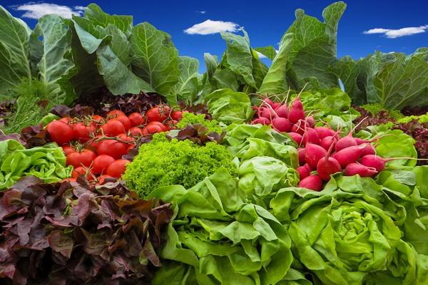 богатый урожай редиса и других овощей