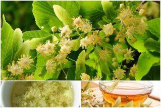 Варенье из цветов липы на зиму: рецепты, советы, полезные свойства