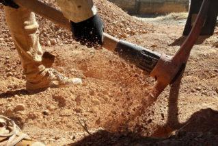 Как улучшить песчаную почву на участке и что на ней можно посадить