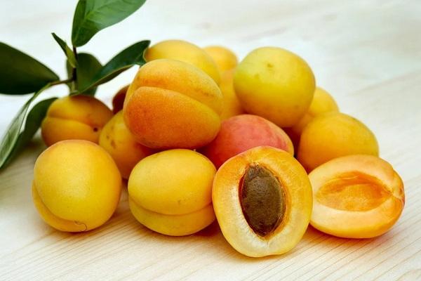 ягода или фрукт абрикос в ботанике