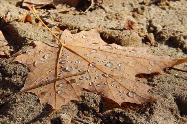 песчаная земля